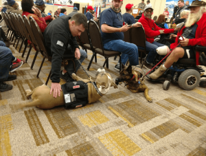 Service dogs at the National Disabled Veterans Winter Sports Clinic